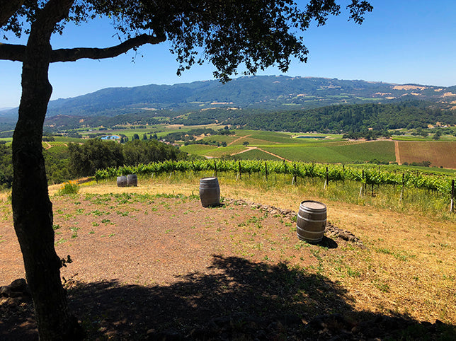 Kunde Winery Mountain Top Tasting
