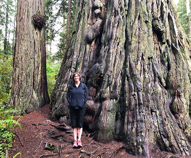 Lady Bird Johnson trail National Redwood Forest