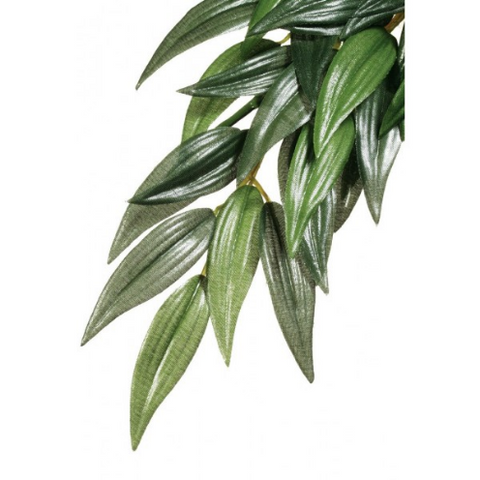 Exo Terra Forest Plant Ruscus Large