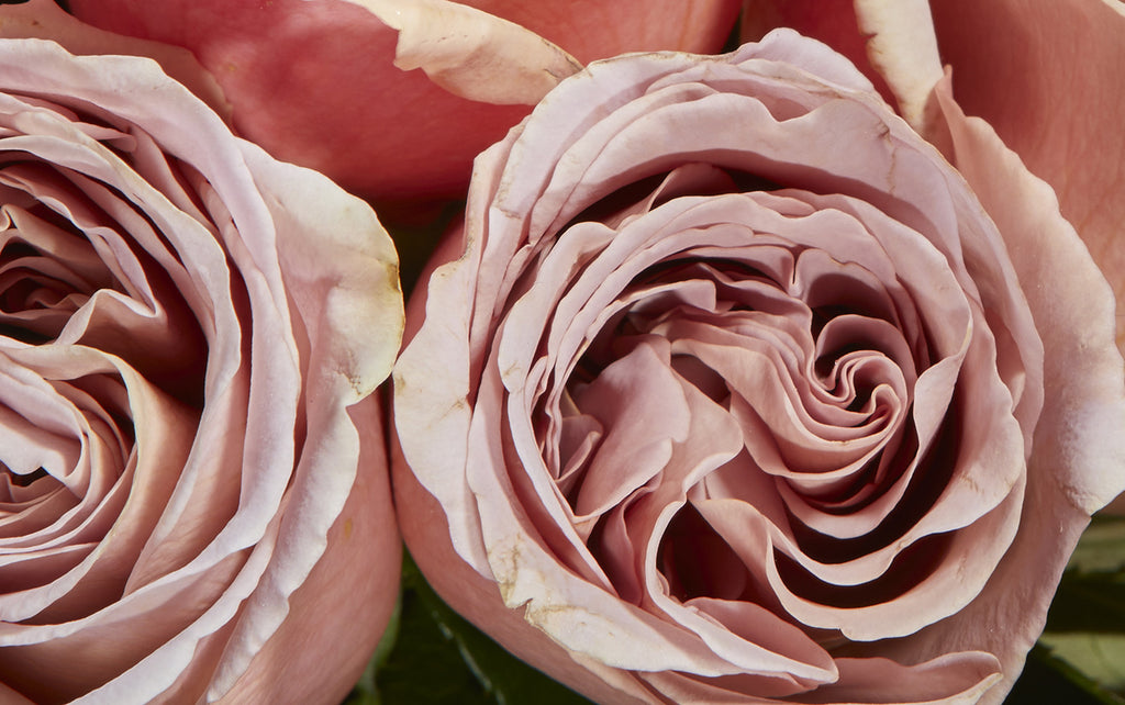 Bloom Flowers – Valentine's Roses