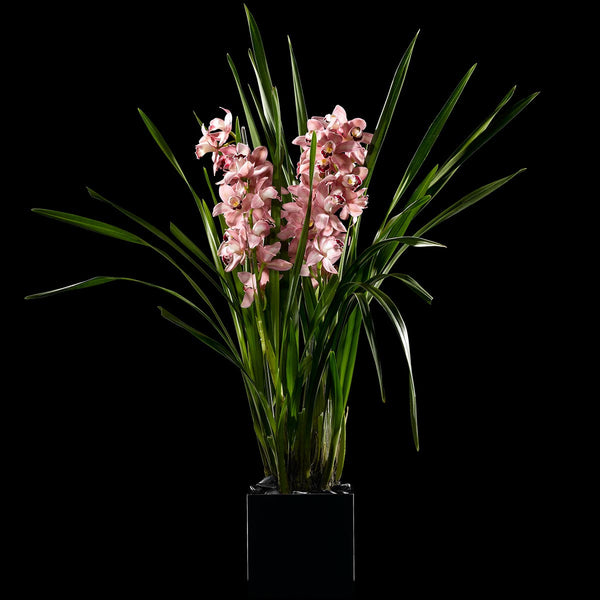 Cymbidium Extraordinaire – Bloom Flowers