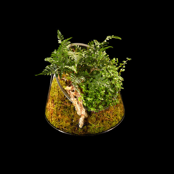 Lé Terrarium | Bloom Flowers
