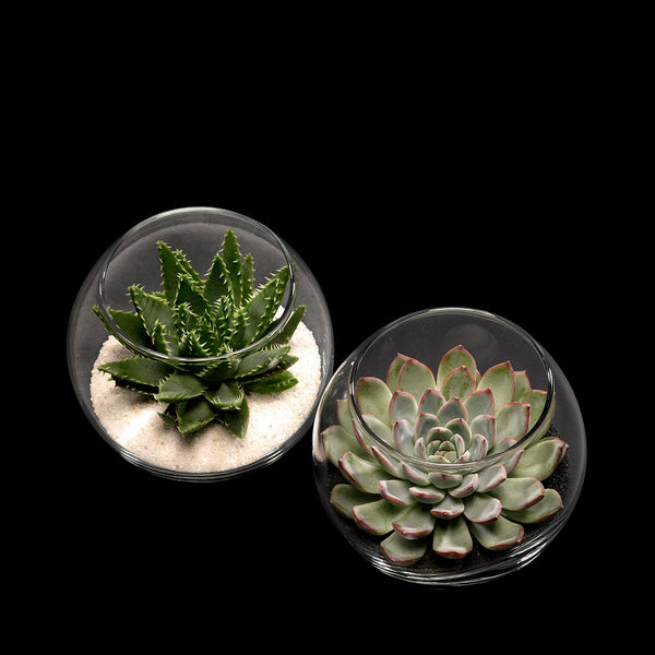 Bloom Flowers – Succulent Globes