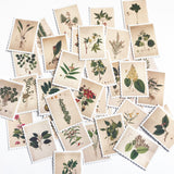 Set of 45 Botanical Vintage Plant & Flower Stamp Stickers - SweetpeaStore