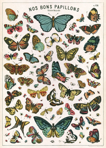 Vintage French Butterfly Plate Wrap Poster - Cavallini & Co - SweetpeaStore