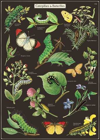 Caterpillars & Butterflies Wrap Poster - Cavallini & Co - SweetpeaStore