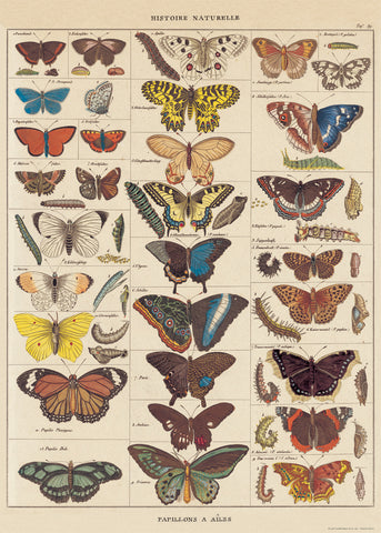 Butterfly Natural History Wrap Poster - Cavallini & Co - SweetpeaStore