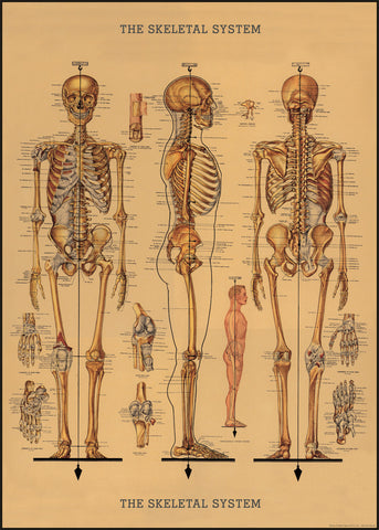 Vintage Physician Skeleton Wrap Poster - Cavallini & Co - SweetpeaStore