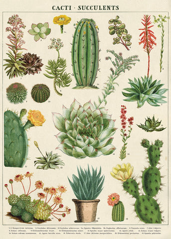 Cacti & Succulents Map Wrap Poster - Cavallini & Co - SweetpeaStore