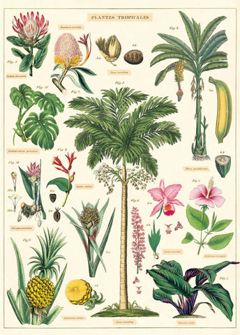 Tropical Plants & Flowers Wrap Poster - Cavallini & Co - SweetpeaStore