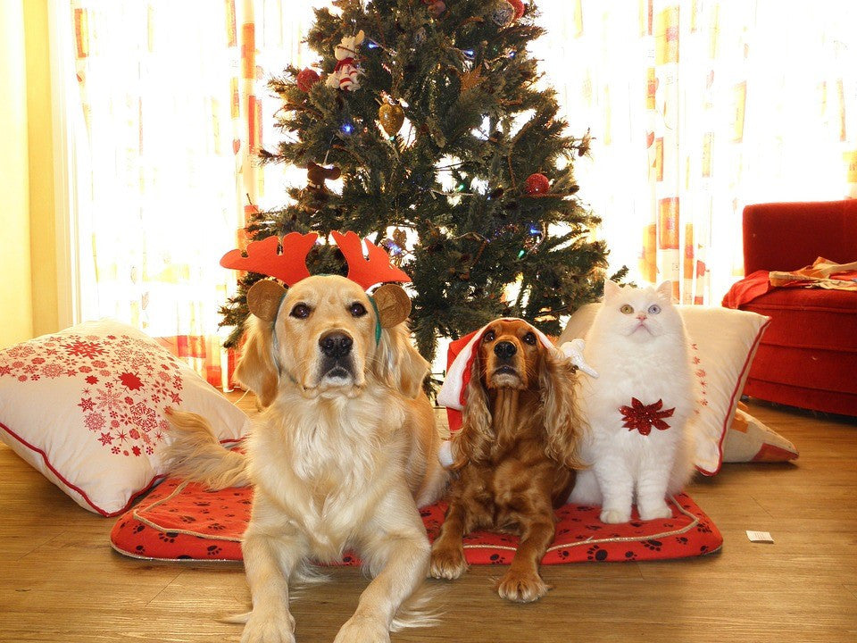 Is My Christmas Tree Safe for My Pets? – The Hydro Pet
