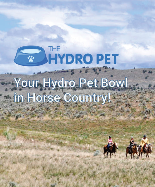 Is Dust OK for my Hydro Pet Bowl?