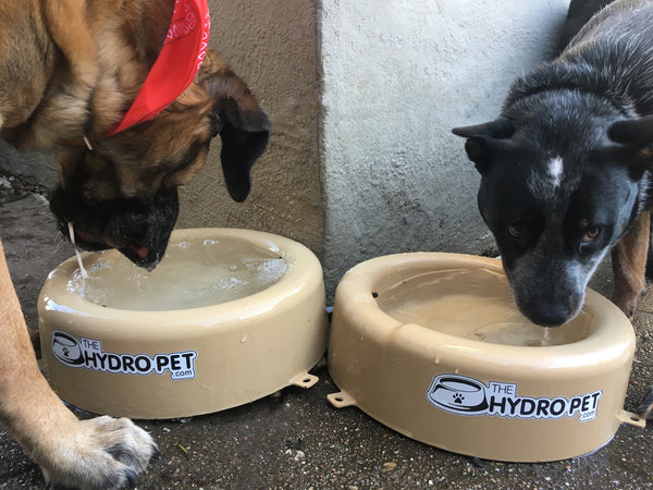 HydroPet Featured at Popular Bay Area Dog Show