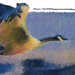 Canada Geese - oil pastel painting