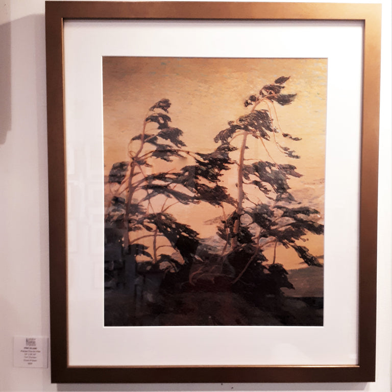 Framed Large Group of Seven Print - Tom Thomson - PINE ISLAND