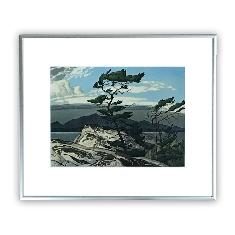 Group of Seven Aluminum Framed Print - A. J. Casson - WHITE PINE, 1957