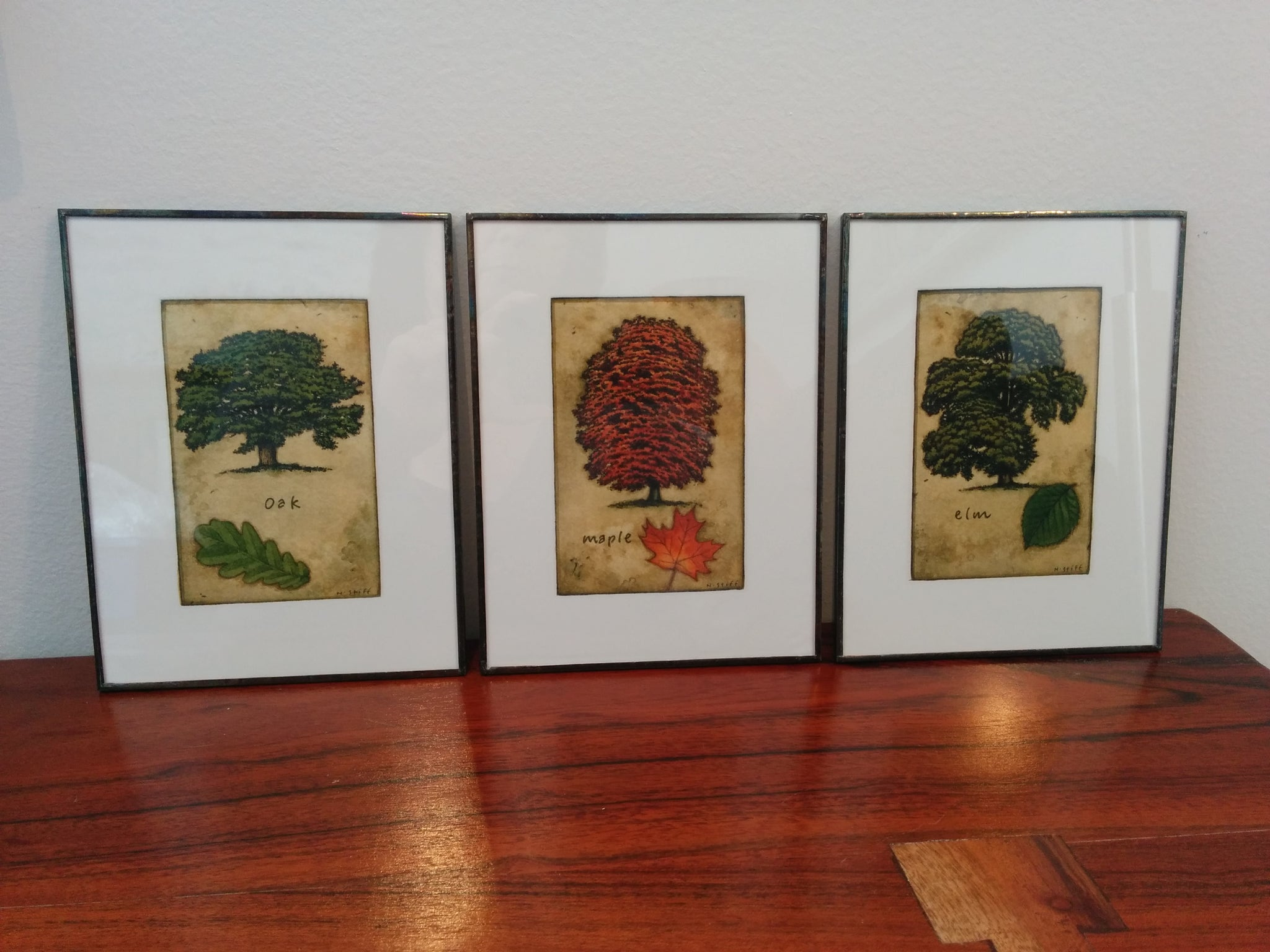 Framed Maple Tree  and Leaf Print