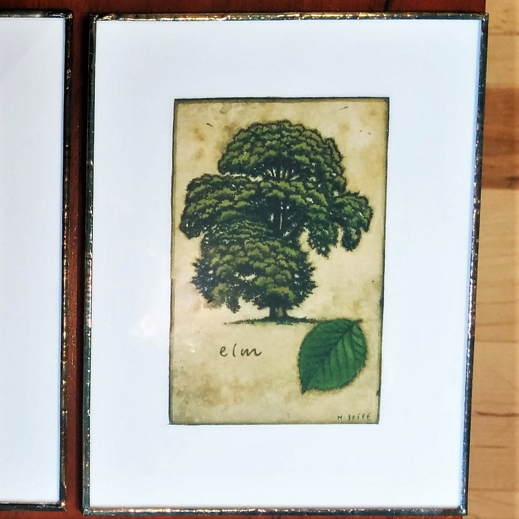 Elm Tree Print by Canadian Artist