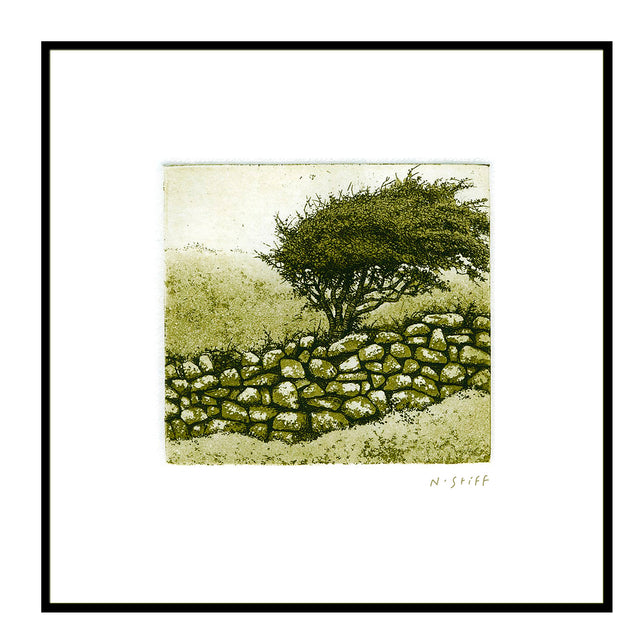 Framed Print - Stone Wall and Blackthorn Bush
