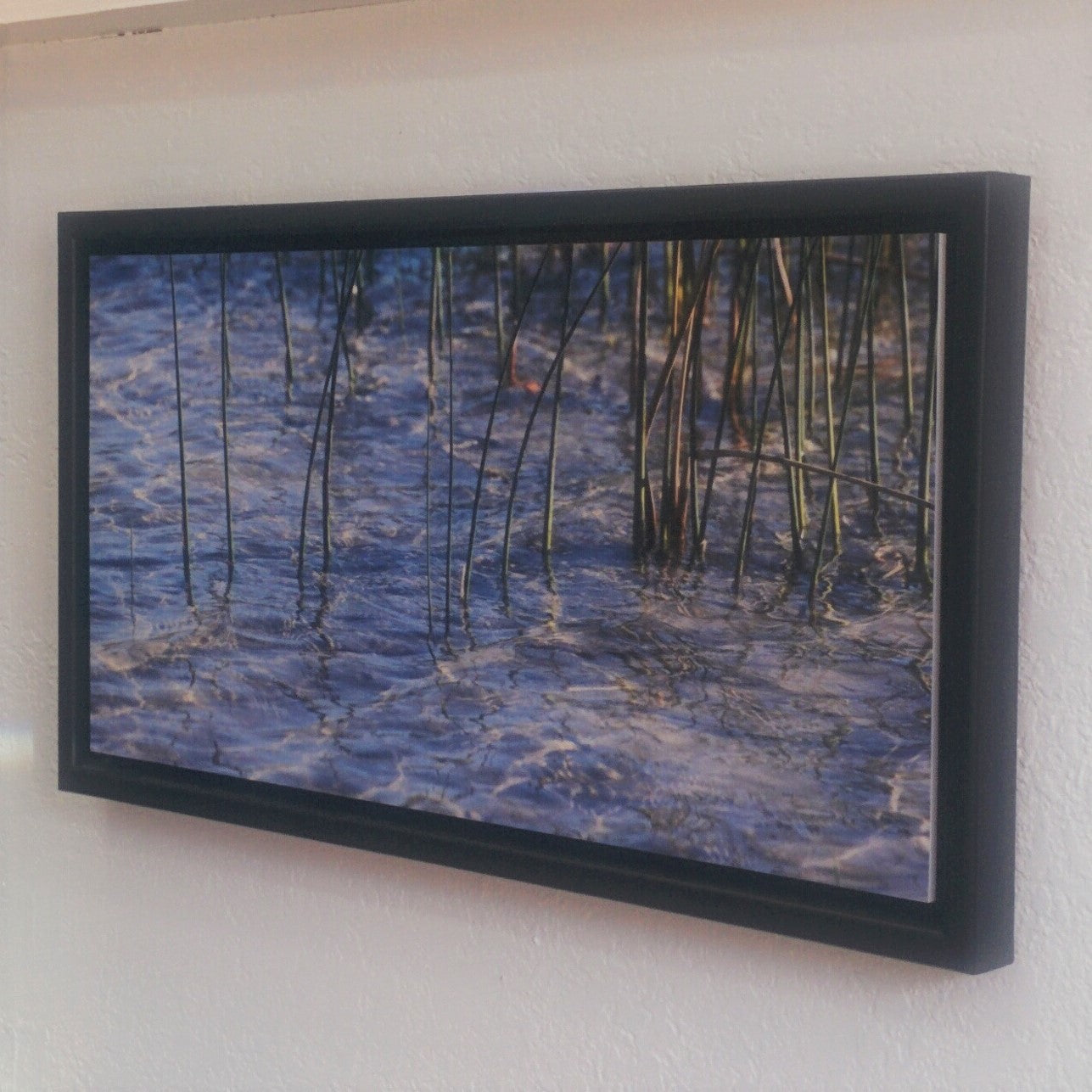 Fine Art Photography - Framed Numbered Print - WAYWARD REEDS
