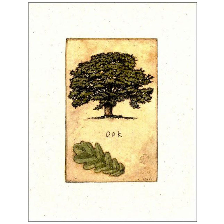 Framed Oak Tree and Leaf Print