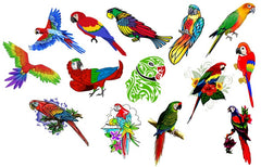 Parrot  Temporary Tattoos