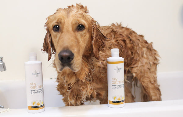 Hands Down the 7 Best Dog Grooming Products
