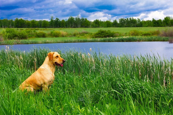 How Nature Can Make Your Dog Beautiful