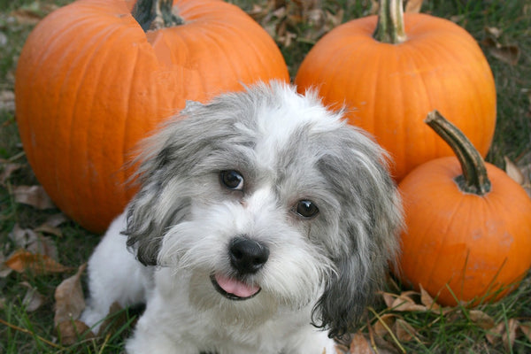 Why Pumpkin is Anything But Basic