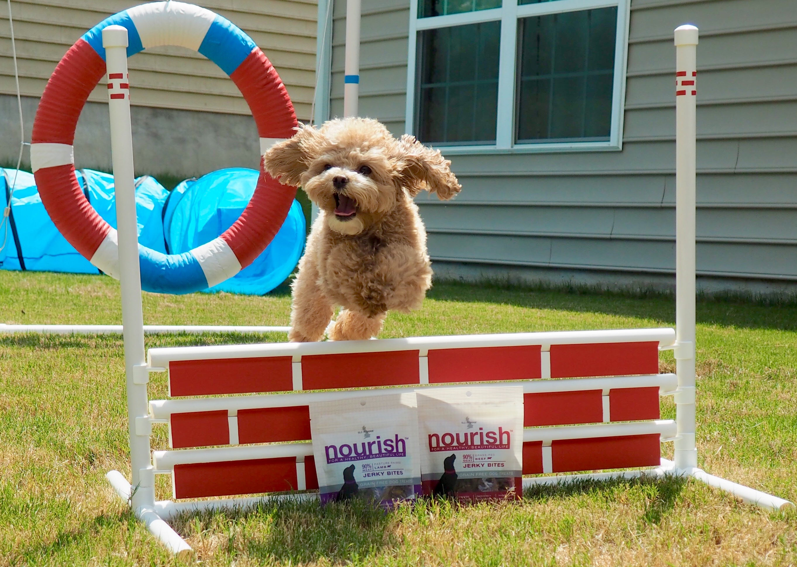3 Valuable Tips for Starting Agility with your Awesome Dog