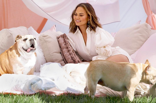 Our Favorite Dog Lovers of Hollywood