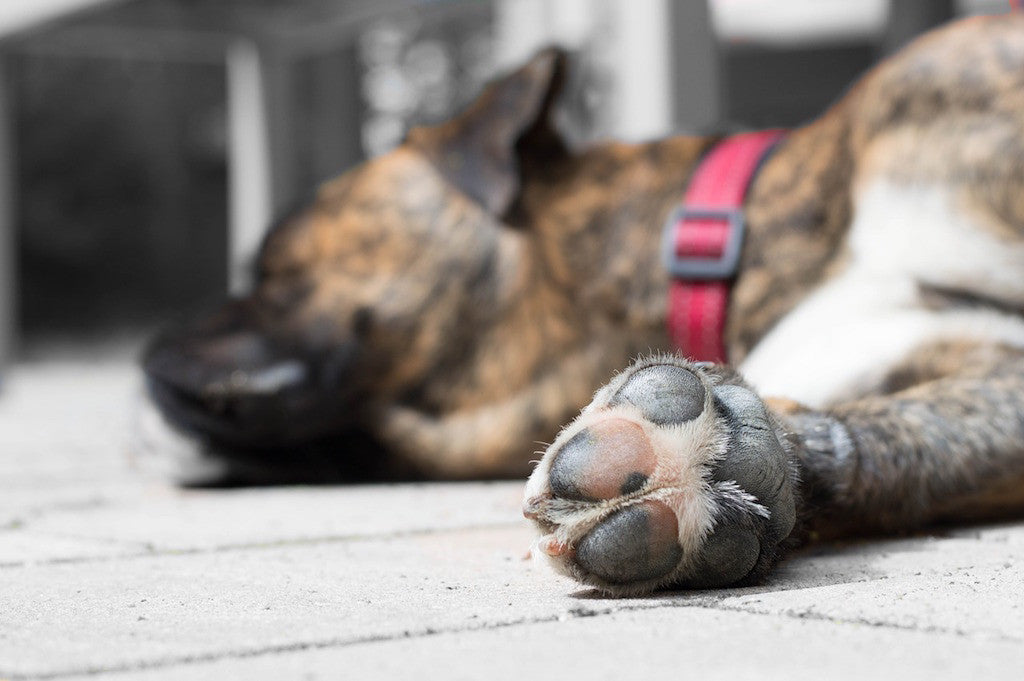 Four Ways to Pamper Your Pet's Paws