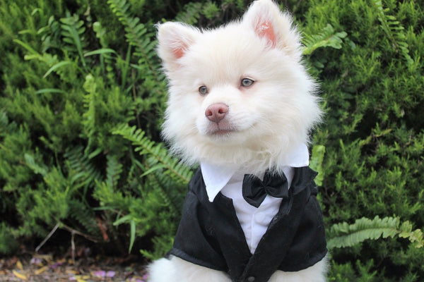 Should Your Dog Be In Your Wedding: Part II