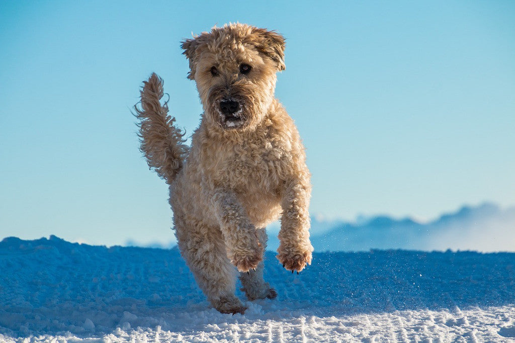 Three Secrets to Combatting Your Dog's Winter Itch