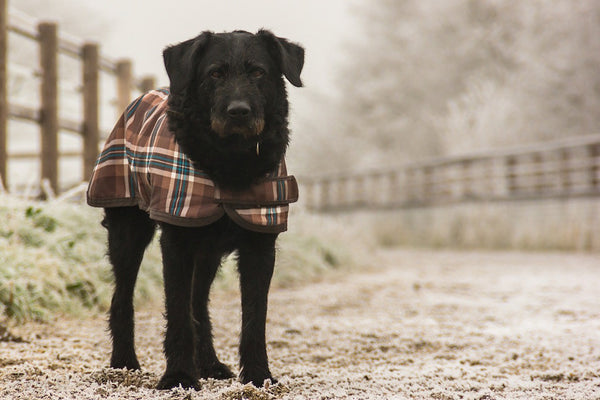 Hot and Cold: How Your Dog's Coat Works
