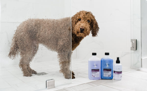 Get That Fresh From The Groomer Glow At Home!