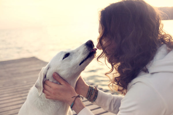 5 Surprising Facts About Keeping Your Dog Healthy