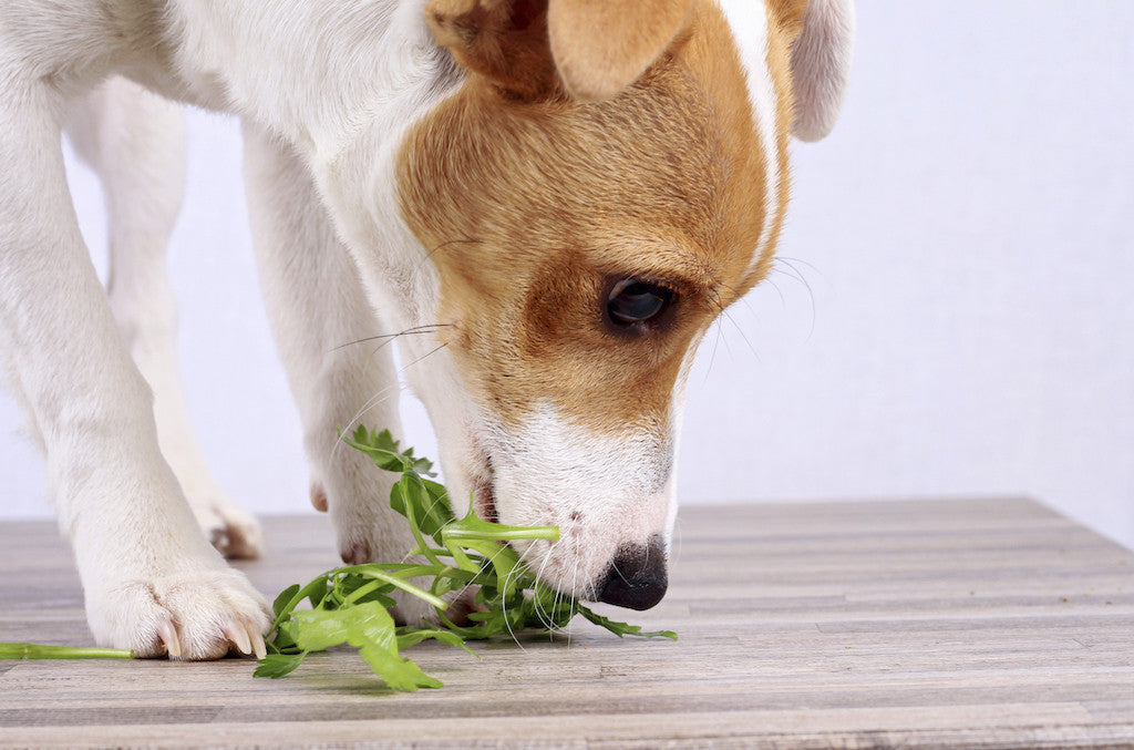 The Two Most Simple Rules for Your Dog's Nutrition