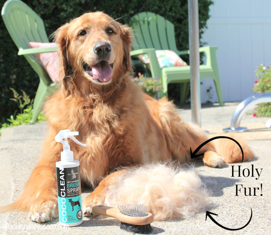 Shedding Tips to Keep Your Dog Comfortable Year Round