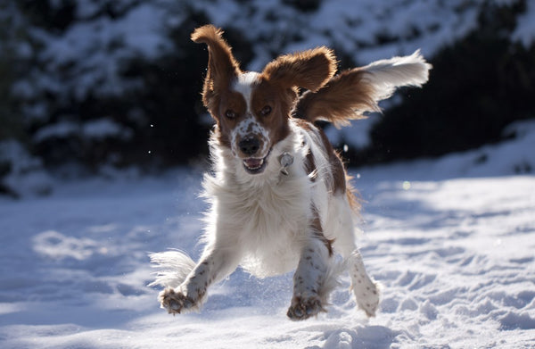 9 Winter Dog Grooming Tips and Reminders - Part 1