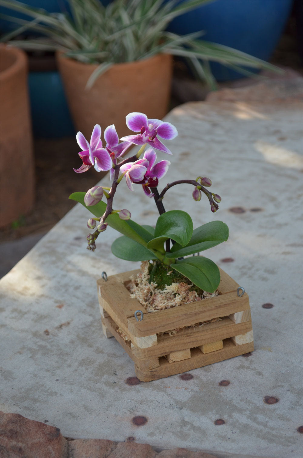 Teakwood Orchid Baskets