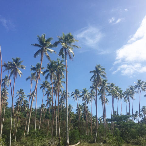 coconutplantations