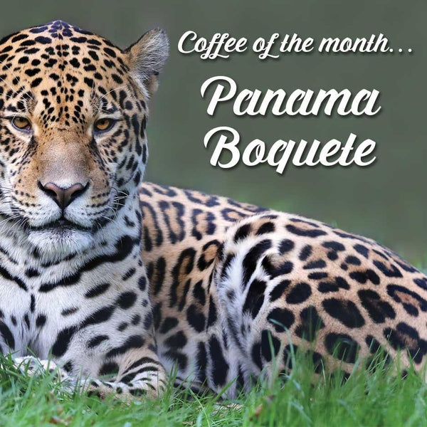 Our Panama Boquete, sourced from the finest growing region of Panama.
