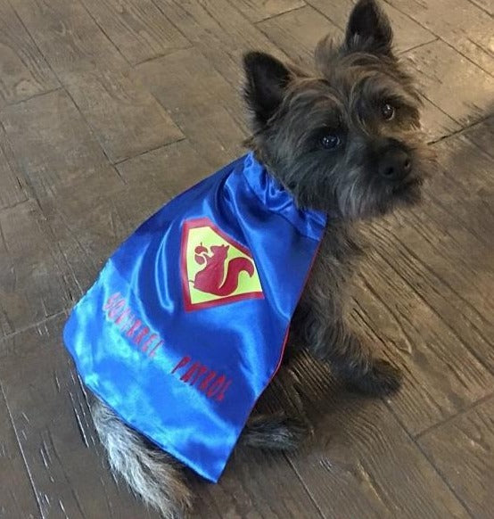 Dog Superhero Cape/ Puppy Superhero Cape - Super Capes and Tutus, Pet Costume, [product_tags], Super Capes and Tutus