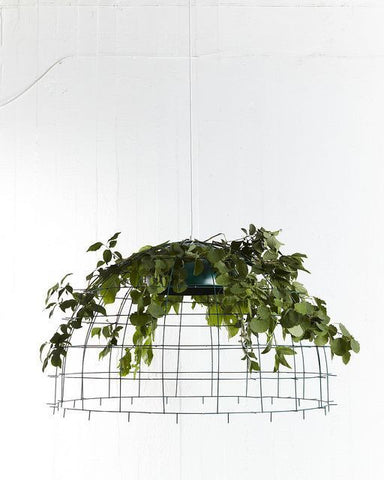 Hanging plants decor
