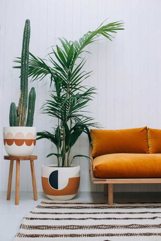 Tall plants home decor