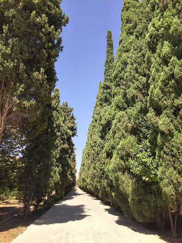 Luggage Outlet Singapore - Shiraz Ali Eram Garden Cypress Trees Iran
