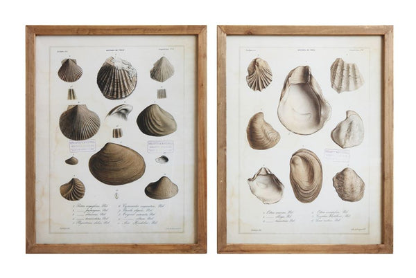 Vintage Shell Field Guide Prints - Wood Framed Wall Decor - Set of 2