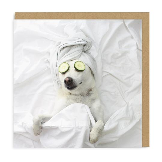 Pampered Pooch - Square Greeting Card