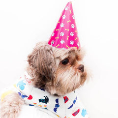 party hat for pets